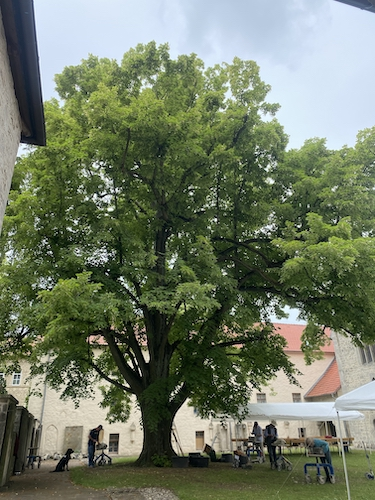 KÖNIGSLUTTER | Kaiserdom | Sommerakademie | Blick aus dem Kreugang in Kreuzganghof